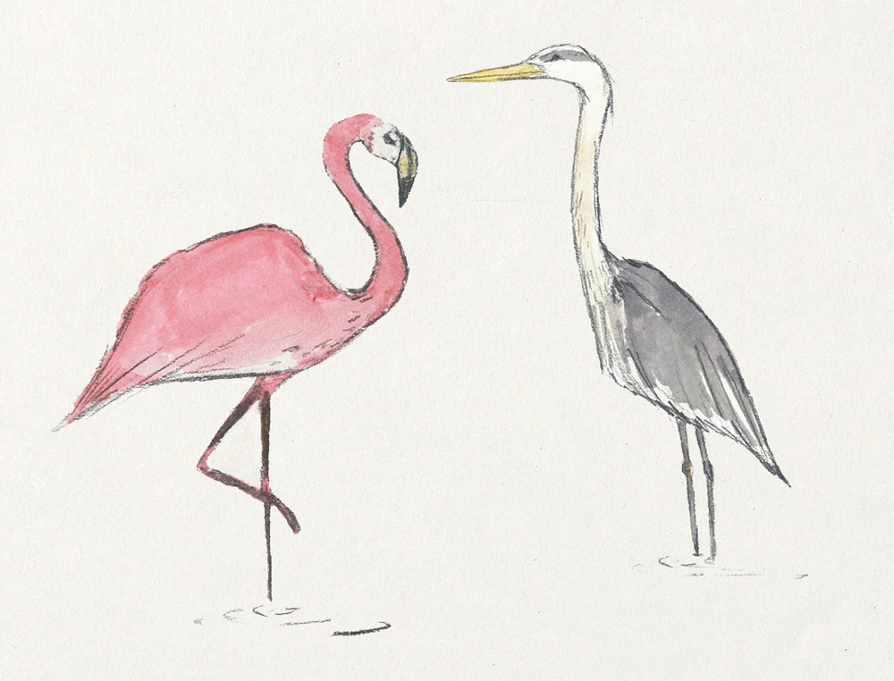 Flamingo and grey heron illustration for Eden Project wine label design